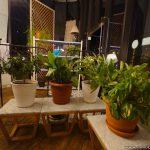cafe gardens batumi 09 INFOBATUMI 150x150